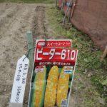 津村さん家の栽培日誌-R3-No.104